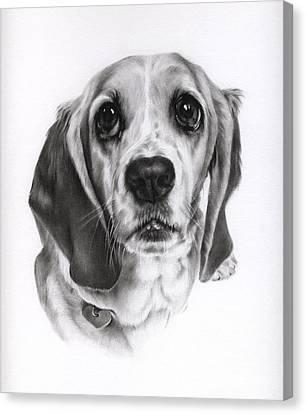 Canvas Print featuring the drawing Sadie by Natasha Denger