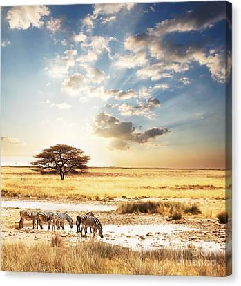 Safari Canvas Print by Boon Mee