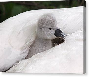 Nestled With Love Canvas Print - Safe And Warm by Gill Billington