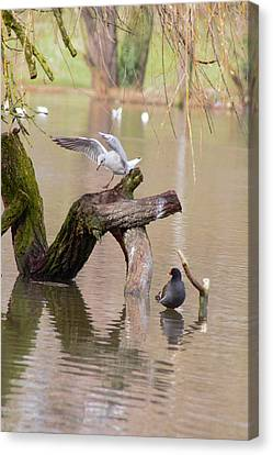 Safe Landing Canvas Print by Theresa Selley