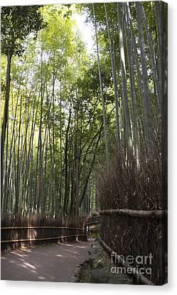 Sagano -- Bamboo Forest Of Arashiyama Canvas Print