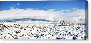 Sage Covered With Snow With Taos Canvas Print