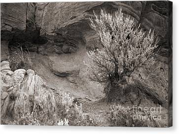 Sagebrush On Polecat Bench Canvas Print by Janeen Wassink Searles