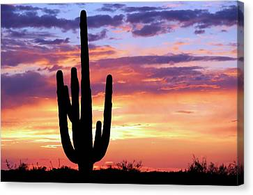 Saguaro At Sunset Canvas Print by Elizabeth Budd