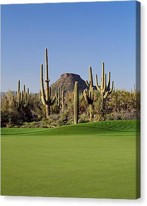 Saguaro Cactus Canvas Print - Saguaro Cacti In A Golf Course, Troon by Panoramic Images