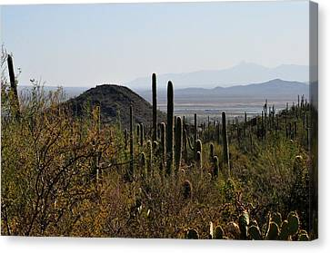 Saguaro Cactus And Valley Canvas Print by Diane Lent