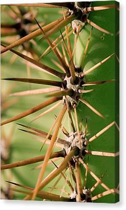 Saguaro Cactus (carnegiea Gigantea Canvas Print by Susan Degginger