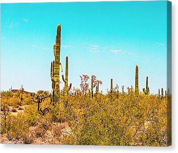 Saguaro Cactus In Organ Pipe Monument Canvas Print by Bob and Nadine Johnston