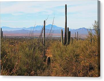 Canvas Print featuring the photograph Saguaro Desert by Alicia Knust