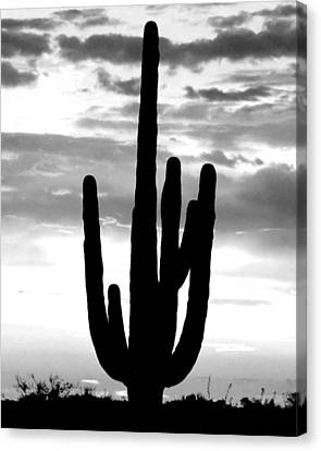 Saguaro In Black And White Canvas Print by Elizabeth Budd