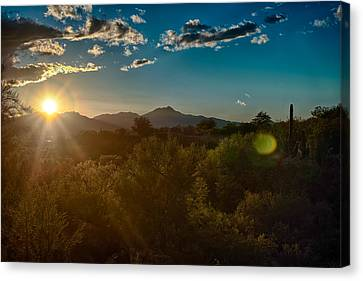 Canvas Print featuring the photograph Saguaro National Park by Dan McManus