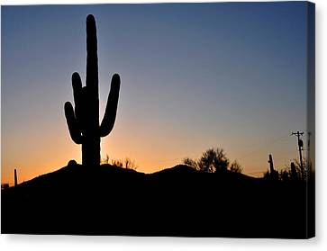 Saguaro Sunset Canvas Print by Diane Lent