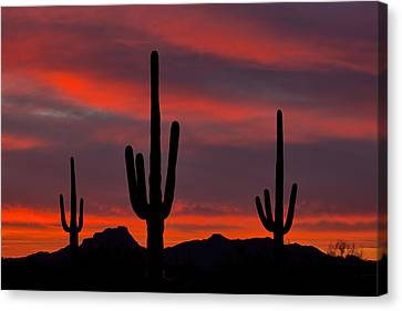 Saguaro Sunset Canvas Print by Guy Schmickle