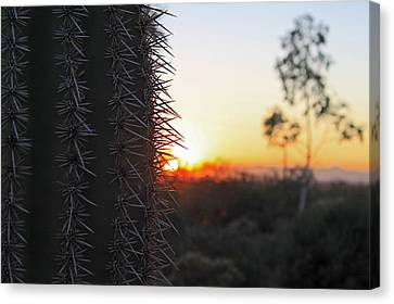 Canvas Print featuring the photograph Sagurao Sunset by Gary Kaylor