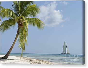 Sailboat Passing By Tropical Beach Canvas Print by Sami Sarkis