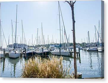 Sailboats On Back Creek Canvas Print by Charles Kraus