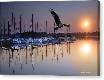 Sailboats Osprey Sunrise Canvas Print by Randall Branham