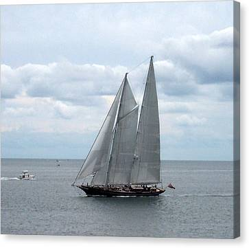 Sailing Day Canvas Print by Catherine Gagne