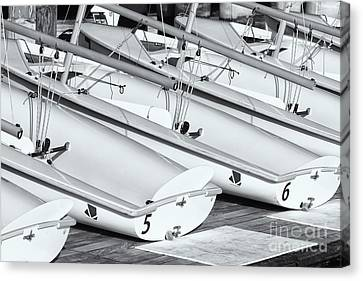 Sailing Dinghies II Canvas Print by Clarence Holmes