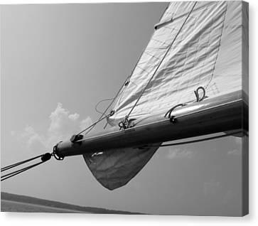 Sailing Canvas Print by Tony Grider