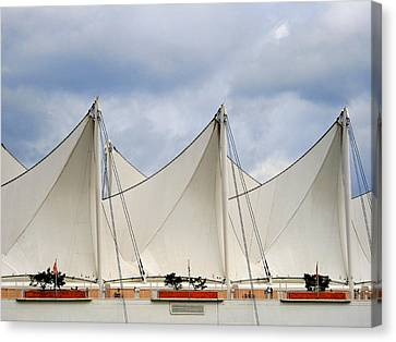 Sails Canvas Print by Alison Miles