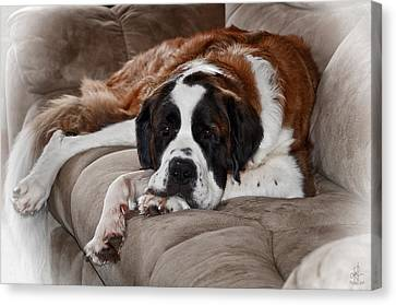 Canvas Print featuring the photograph Saint Bernard by Pennie  McCracken