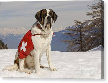 Saint Bernard Rescue Dog Canvas Print by Jean-Michel Labat