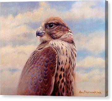 Saker Falcon - Ayra Canvas Print