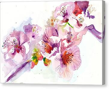 Sakura - Cherry Flowers Watercolor Canvas Print by Tiberiu Soos
