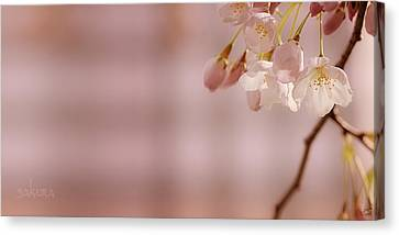 Sakura Canvas Print by Lisa Knechtel
