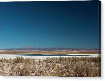 Pedro Canvas Print - Salar De Atacama, Atacama Desert, Chile by Sergio Pitamitz