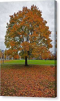 Oxford. Oxford Ma. Massachusetts Canvas Print - Salem Commons Foliage by Toby McGuire