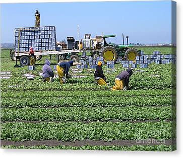 Canvas Print featuring the photograph Salinas Farmworkers by James B Toy