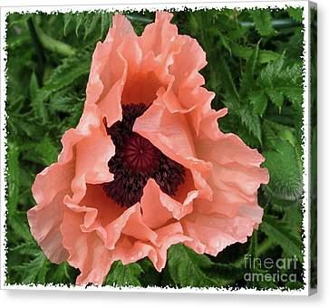 Canvas Print featuring the photograph Salmon Colored Poppy by Barbara Griffin