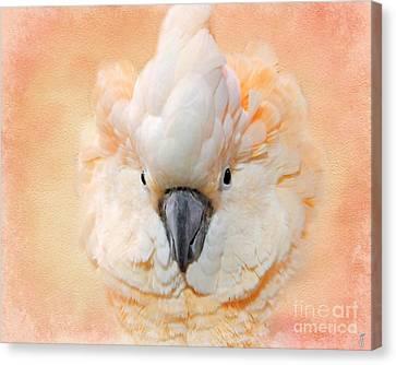 Salmon Crested Cockatoo Canvas Print