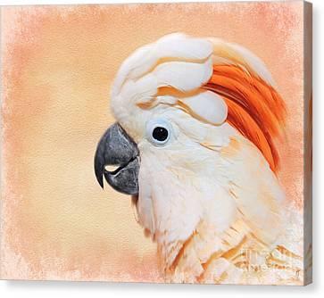 Salmon Crested Cockatoo Portrait Canvas Print