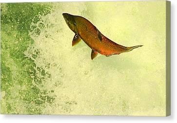 Salmon Run 3 Canvas Print by Mamie Gunning