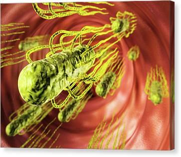 Salmonella Infection Canvas Print