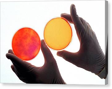 Salmonella Sterilisation Testing Canvas Print by Ken Hammond/us Department Of Agriculture