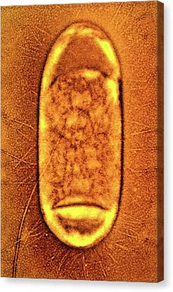 Salmonella Typhimurium Bacterium Canvas Print by Peter Cooke, Lenier Tucker/us Department Of Agriculture