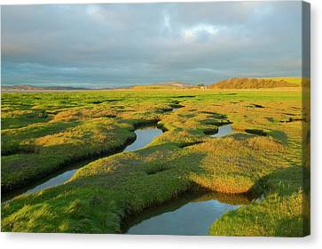 Salt Marsh At Hest Bank Canvas Print by Ashley Cooper