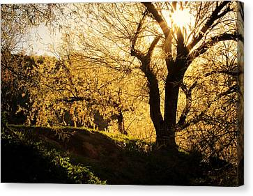 Salt River At Sunset Canvas Print by Kelly Gibson