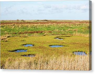 Saltmarsh Canvas Print by Ashley Cooper