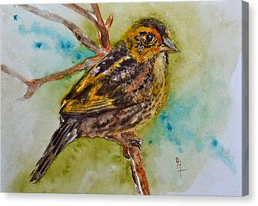 Saltmarsh Sparrow Canvas Print by Beverley Harper Tinsley
