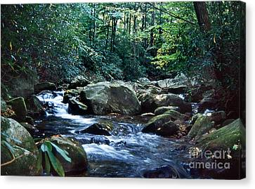 Saluda Headwaters Canvas Print by Skip Willits