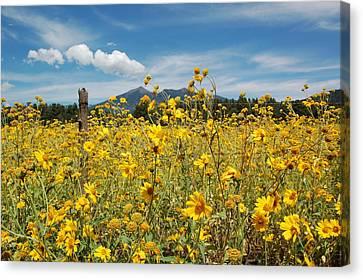 Northern Arizona Canvas Print - San Francisco Peaks by Kelly Wade