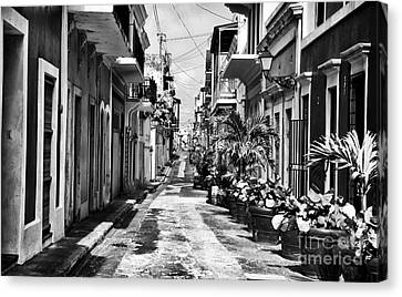 San Juan Street Plants Canvas Print by John Rizzuto