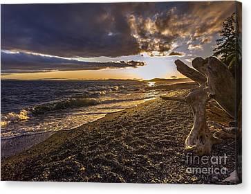 San Juan Islands Canvas Print - San Juans Majestic Driftwood by Mike Reid