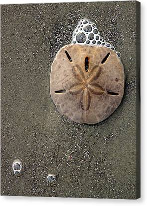 Canvas Print featuring the photograph Sand Dollar by Tom Romeo