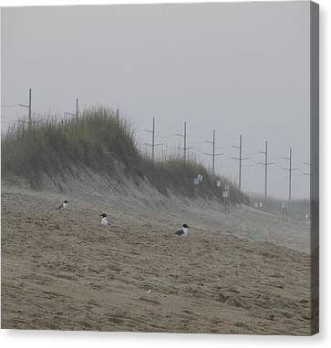 Sand Dunes And Seagulls Canvas Print by Cathy Lindsey